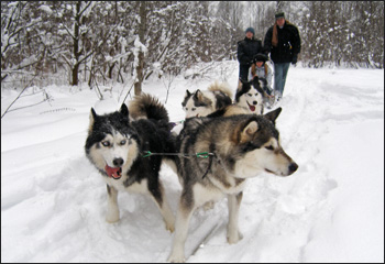 Dog-sledging in the Moscow countryside